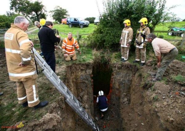Пожарная бригада спасла телёнка (7 фото)