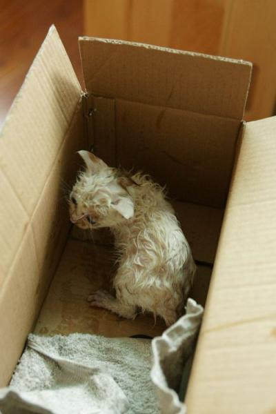История одного котенка (18 фото)