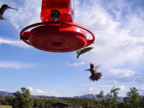 Опасные насекомые (11 фото)