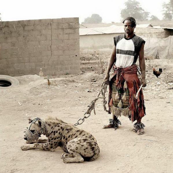 Домашние животные в Африке (14 фото)