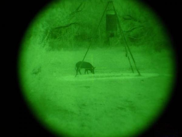 Охота на кабанов (5 фото)