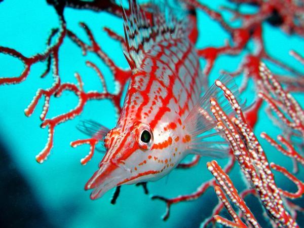 Удивительный прекрасный подводный мир (12 фото)