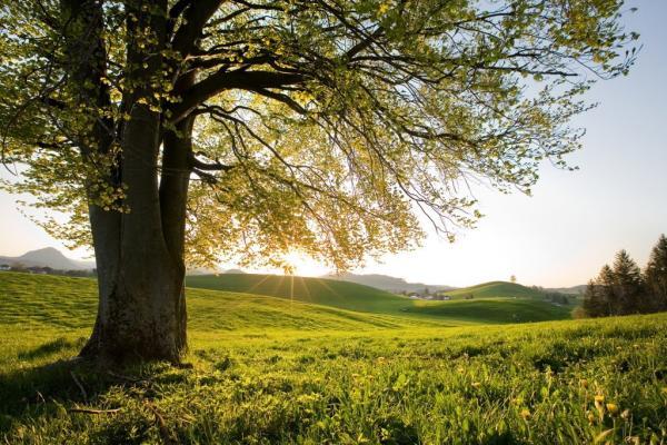 Красота природы (15 фото)