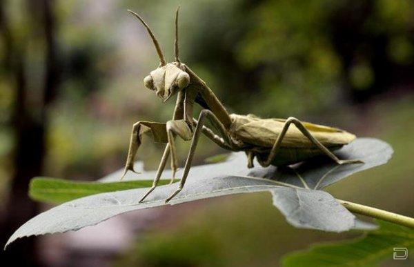 Оригами насекомых (11 фото)