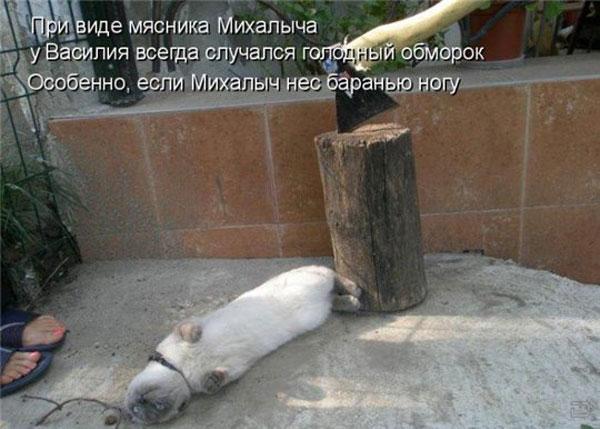 Прикольные картинки животных с подписями (44 фото)