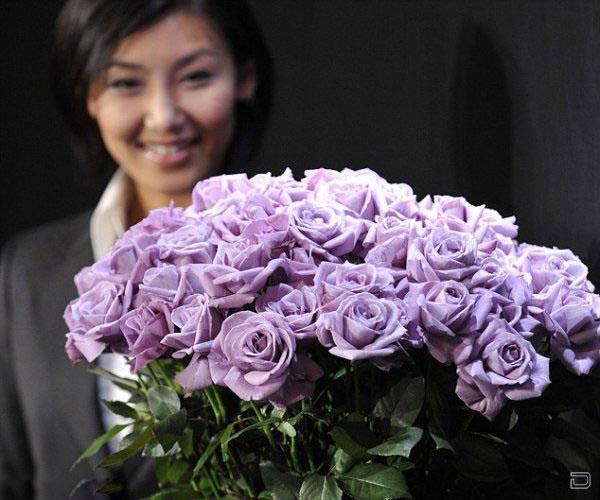 Голубые розы (4 фото)
