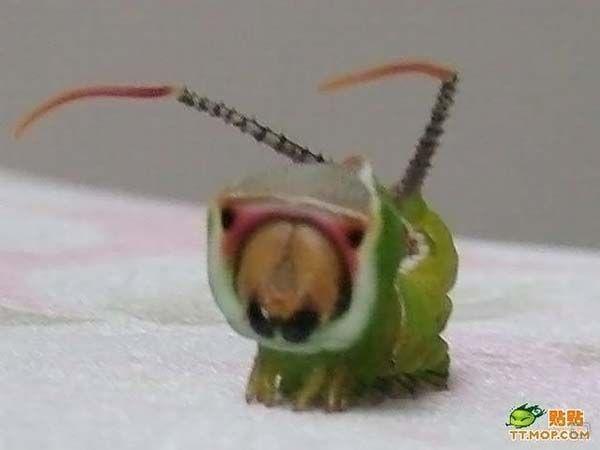 Необычное насекомое (5 фото)