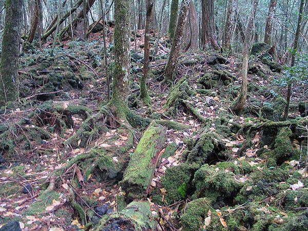 Аокигахара - лес самоубийств в Японии (19 фото)