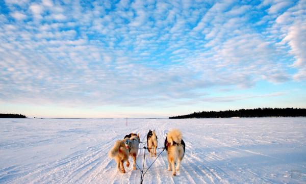 Лапландия (8 фото)