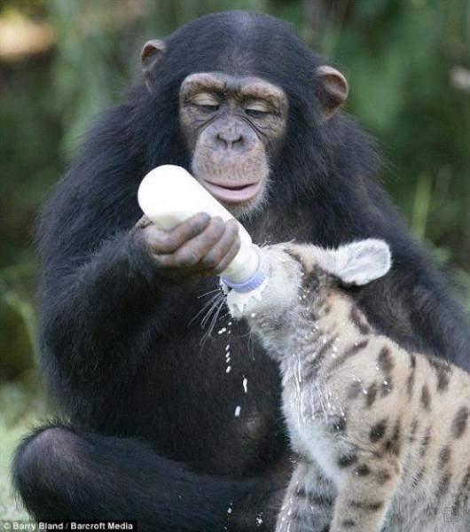 46 любопытных фактов о животных