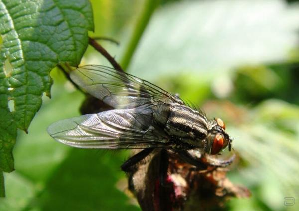 Кому нибудь нравятся мухи? (4 фото)