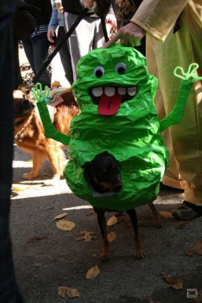 Halloween 2009! (85 фото)