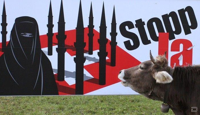 Швейцарская корова голосует (3 фото)