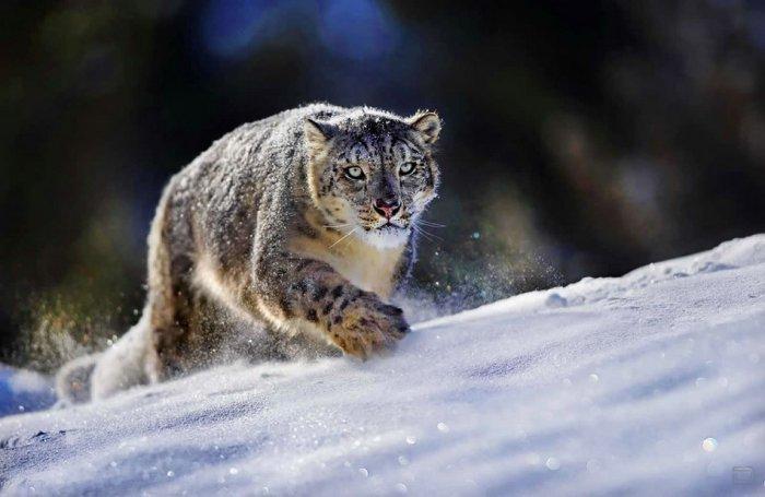 Красивые фотографии животных | ВКонтакте