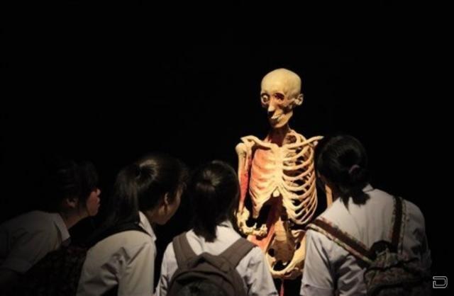 Выставка человеческого тела (16 фото)
