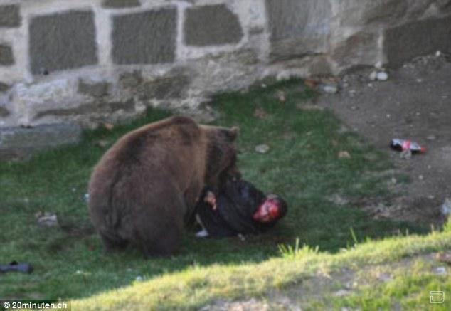 Нападения медведя на человека в зоопарке (5 фото)