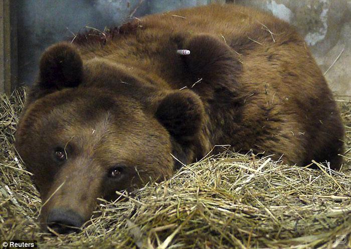 Нападение медведя на человека (7 фото)