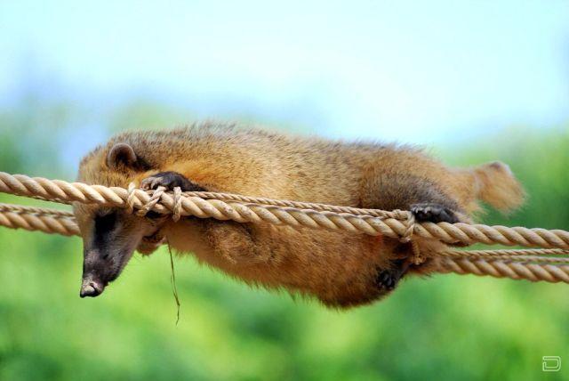 Забавные животные (73 фото)