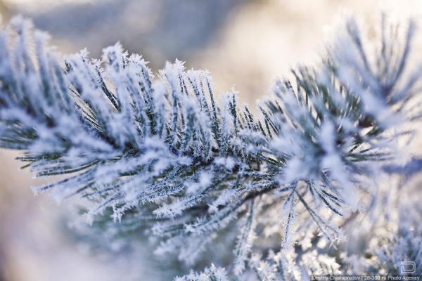 Снежная битва на таймс сквер 15 фото