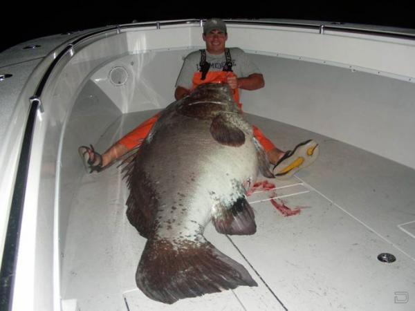 Американский студент поймал огромного морского окуня (5 фото)