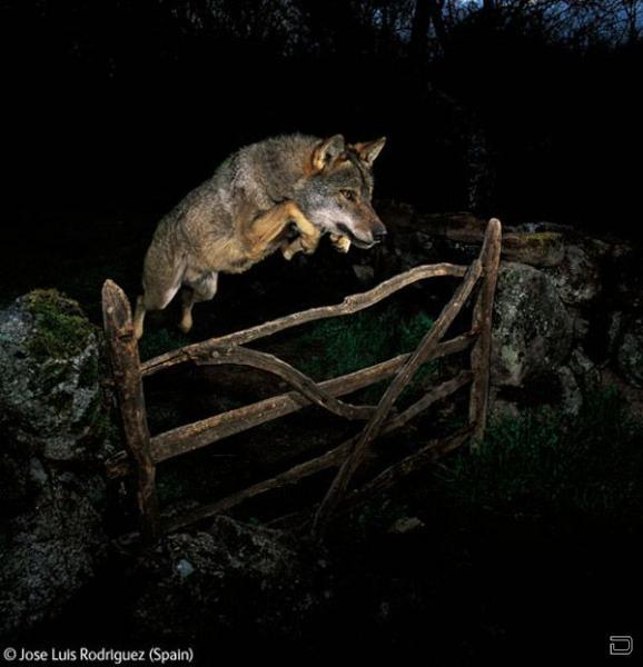 Лучшие фотографии природы 2009 - Wildlife Photographer