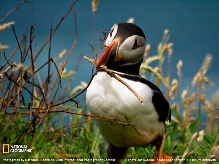 Красивые фотографии от National Geographic (22 фото)