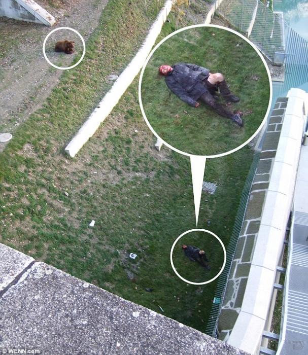 """Нападение медведя на человека  """" Всяко-разно.ру - Смотреть."""