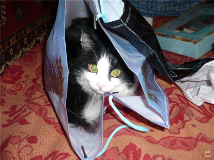 Смешные кошки и коты