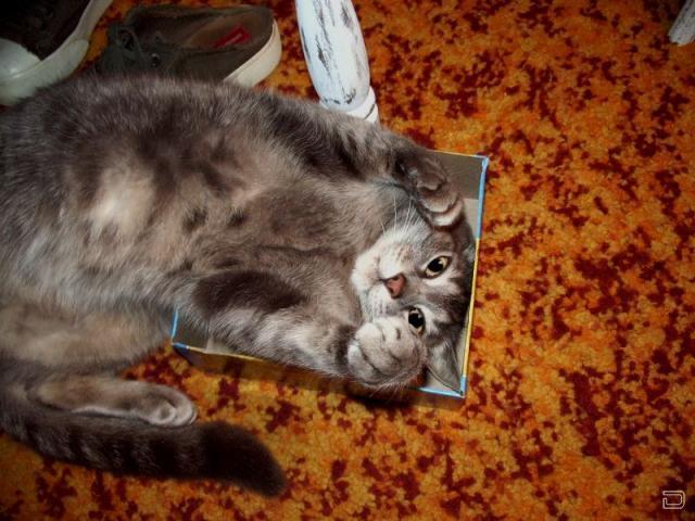 Кошки везде (48 фото)
