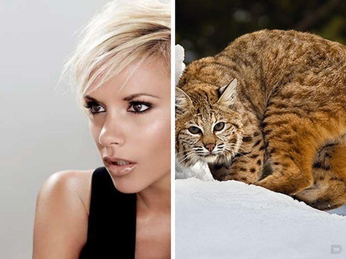 Знаменитости, похожие на животных (22 фото)