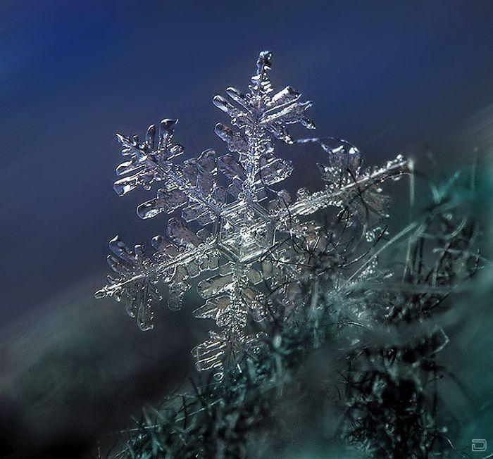 Потрясающие снежинки (49 фото)