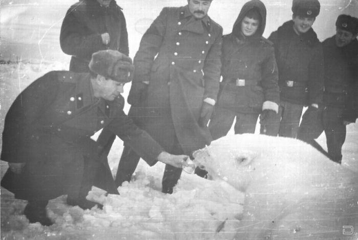 Кормление полярных медведей (12 фото)