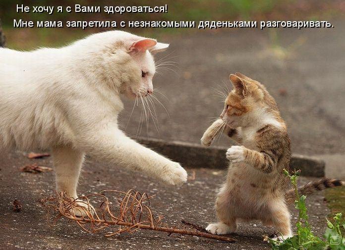 Приколы с котами или коты говорят