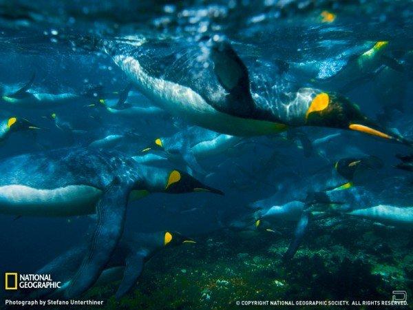 Самые красивые фото от National Geographic (18 штук)