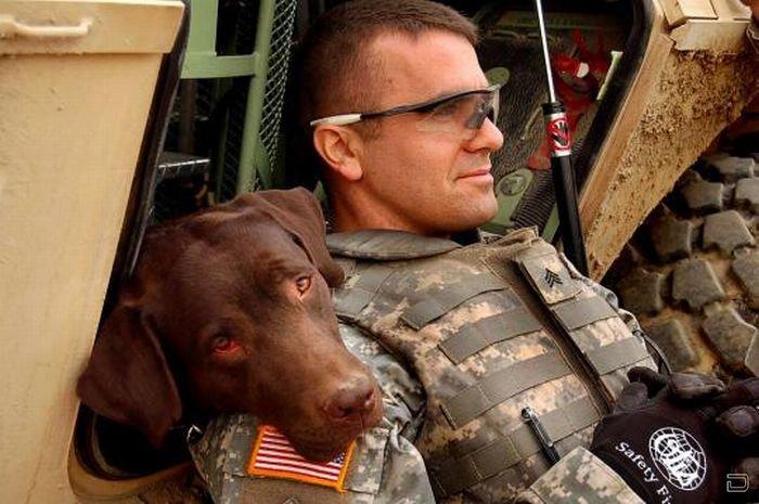 Обученные псы на службе армии США