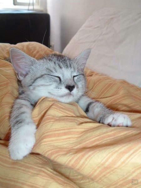 Спящие котики (24 фото)