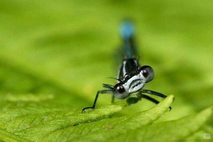 Красивые макро фото насекомых от Roeselien Raimond (62 фото)