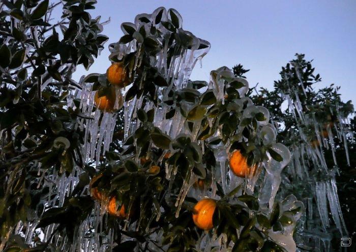 Зима во Флориде (12 фото)