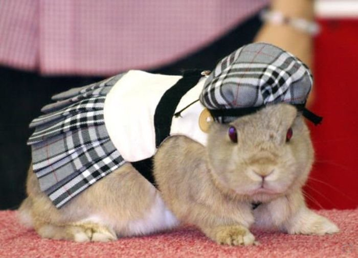 Показ одежды для кроликов (12 фото)