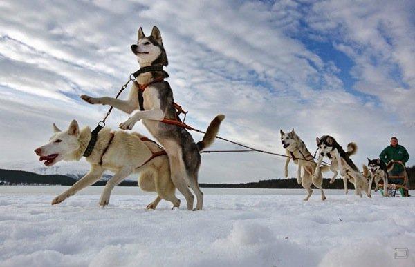 Ежегодное собачье ралли в Шотландии