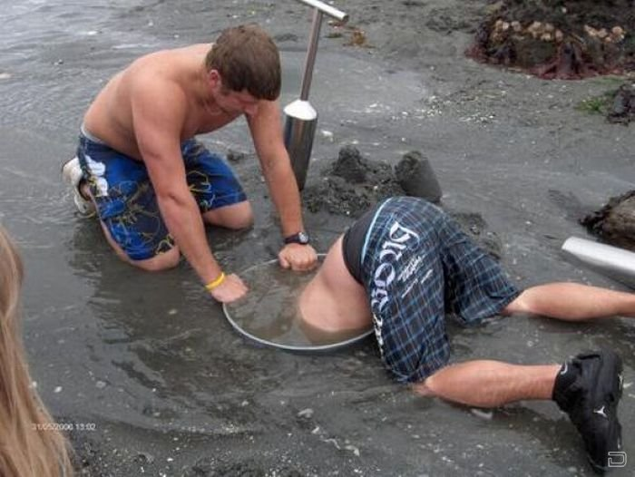Королевский морской моллюск - Геодак