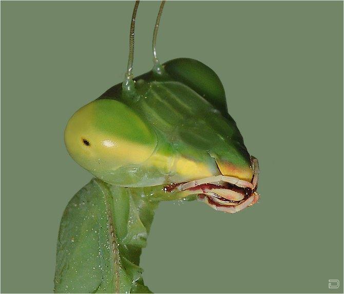 Макросьемка насекомых