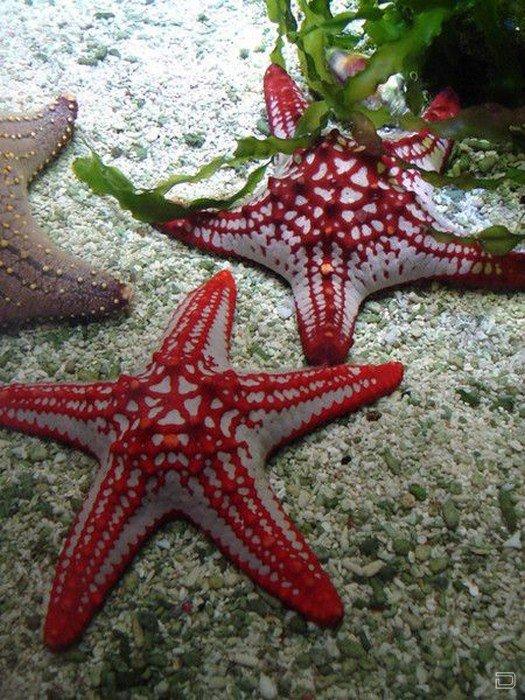 Сказочные морские звезды
