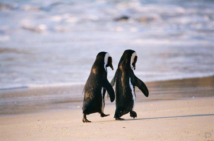 Любовь и дружба животных
