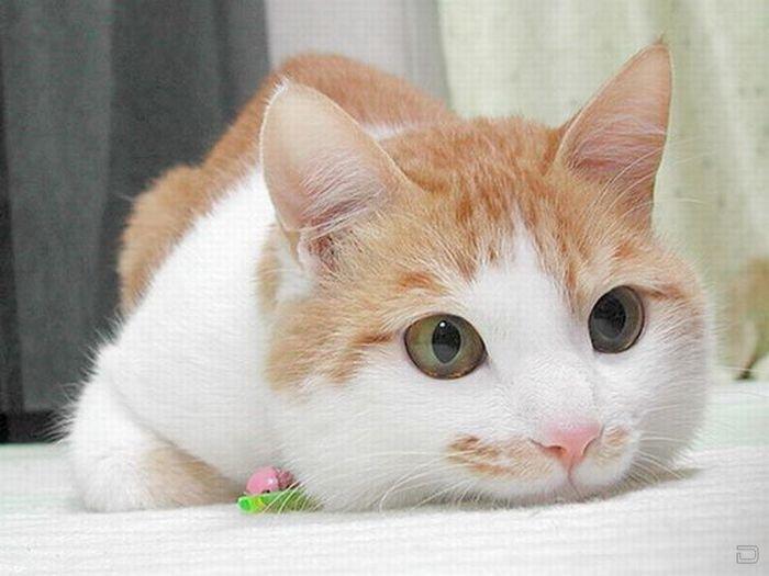 Большая подборка прикольных котов (53 фото)