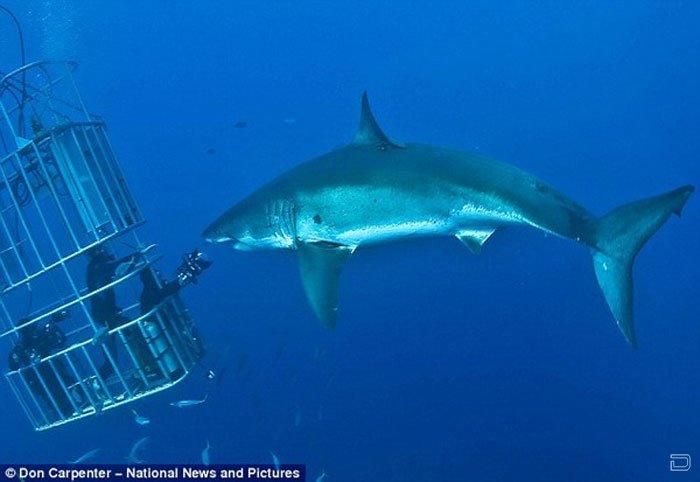 Улыбка акулы