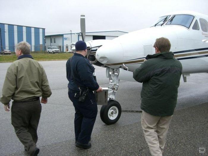Отчаянные чайки против самолета (3 фото)
