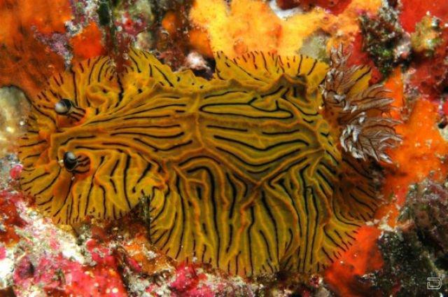 Изумительные морские моллюски (31 фото)