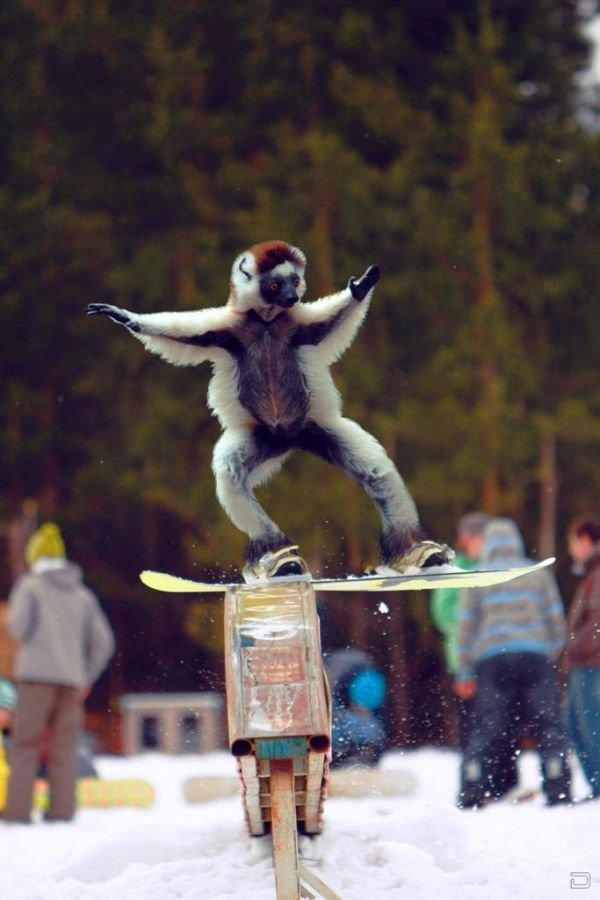 Смешные картинки про сноубордистов, рисует картинки жизни