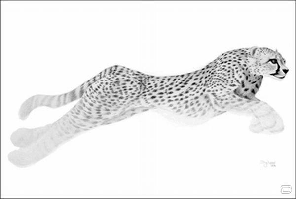 Необычные рисунки карандашом Дуга Лэндиса (12 фото)